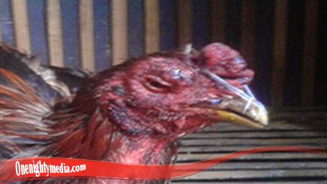 Cara Ampuh Sembuhkan Mata Ayam S128